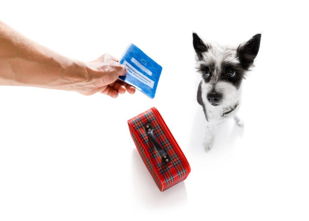 3 documentos necessários para viajar com animais