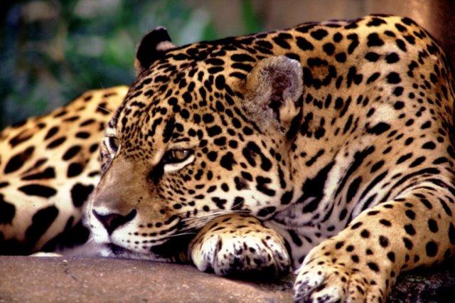 O Pantanal brasileiro e 5 coisas para se fazer lá!