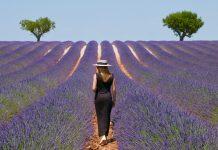 conhecer Provence