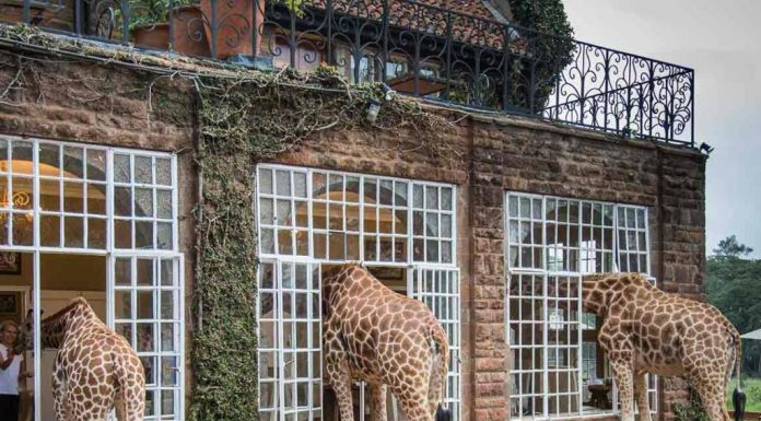 hotel com girafas